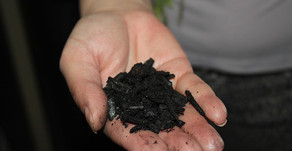 This 700-Year-Old Farming Technique Can Make Super Fertile Soil