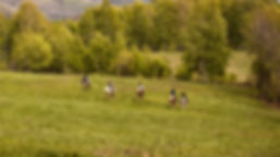 cheval, équitation, champs