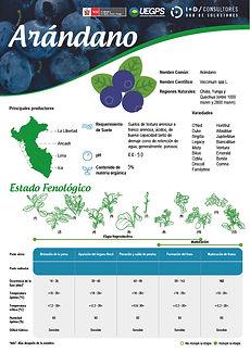 infoagro_fichas-tecnicas_arandanos.jpg