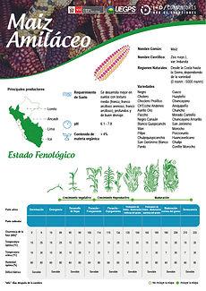 infoagro_fichas-tecnicas_maiz-amilaceo.j