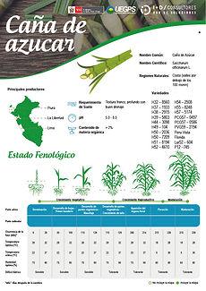 infoagro_fichas-tecnicas_caña-azucar.jpg