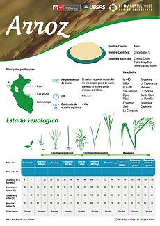 infoagro_fichas-tecnicas_arroz.jpg