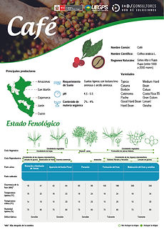 infoagro_fichas-tecnicas_cafe.jpg
