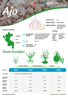 infoagro_wix_cultivos_Ajo.png