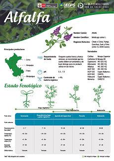 infoagro_fichas-tecnicas_alfalfa.jpg