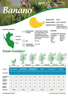 infoagro_fichas-tecnicas_banano.jpg