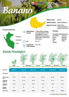 infoagro_wix_cultivos_Banano.png