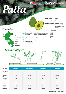 infoagro_wix_cultivos_Palta.png