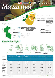 infoagro_fichas-tecnicas_maracuya.jpg