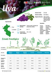 infoagro_wix_cultivos_Uva.png