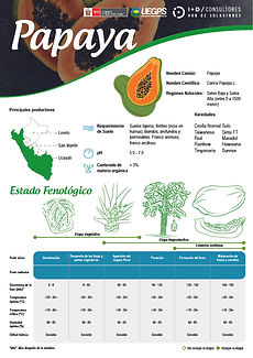 infoagro_fichas-tecnicas_papaya.jpg
