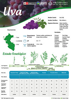 infoagro_fichas-tecnicas_uva.jpg