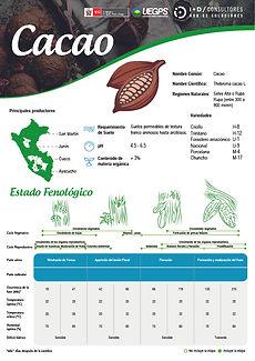 infoagro_fichas-tecnicas_cacao.jpg