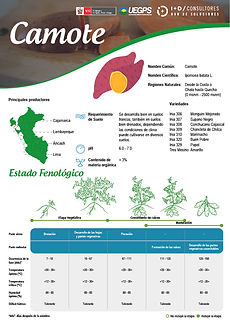 infoagro_fichas-tecnicas_camote.jpg