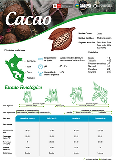 infoagro_wix_cultivos_Cacao.png