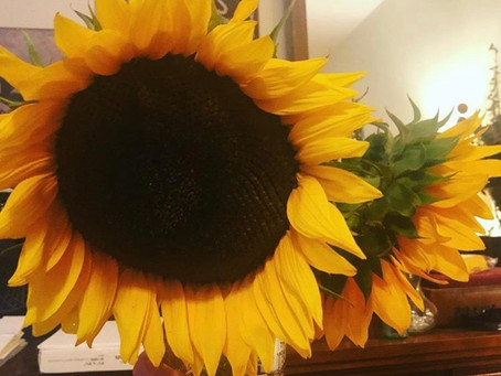 Sunflowers and the Law of Attraction