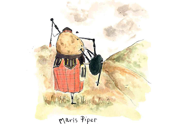 Maris Piper