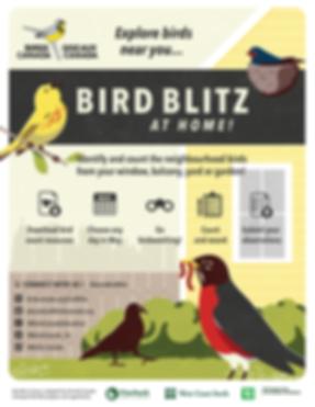 BirdBlitz_POSTER_EN.png