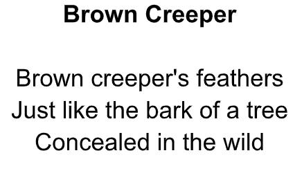 Brown Creeper