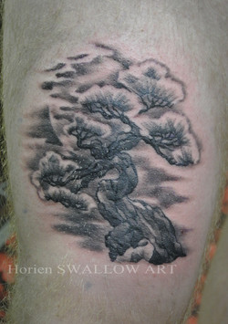 松・月/Pine tree & moon