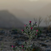 A lone plant stands illuminated by the last sun in the wadis around Jebel Um Anab.