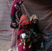A goat kid was born in the family's herd yesterday & to keep him warm in the cold desert night he was wrapped in three fleece blankets. The girls are first to unwrap him in the morning & will care for him in the coming days & weeks until he is strong enough to sleep out with the herd.