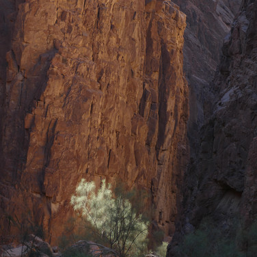 The trail continues in a red rock canyon. A shaft of morning sunlight illuminates a moringa tree ahead.