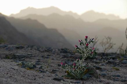 plants-mountains-hurghada-ben-hoffler.jp