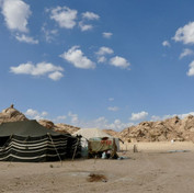 Traditional Bedouin tents are black with white stripes. They are called the 'Bayt el Shaar' or 'House of Hair'. Goat hair is used to make the tents & offers excellent shade & shelter. Smoke can escape through the weave of a goat hair tent, allowing fires to be lit inside. When it rains the goat hair absorbs water & becomes a tighter weave with less gaps, giving excellent water resistance in light rain. Tents show how close the Bedouin have managed to live to their herds & the land. The hair of goats provides their homes. Goat skins are used as waterbags. Goat milk is used to make ghee & cheese & the meat is eaten. The Bedouin have survived this way in one of the hardest environments on earth & have much to teach the world on how to live sustainably.