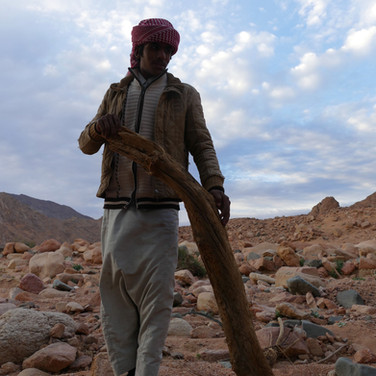 The trail ends at the bottom of Jebel Nasb Umsayri, at the end of the second day. This is Musallem, with a piece of wood for the evening fire.
