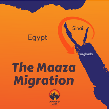 The Maaza trace their roots to the northern parts of Arabia's Hejaz mountains. Sometime in the last 300-400 years a wave of Maaza Bedouin moved out of Arabia to Egypt. One story has it they departed to escape conflict with a tribe called the Howaytat, moving through the Sinai as they were mercilessly pursued & harried with only a few tents arriving in Egypt. On arrival they moved south, battling other tribes until they eventually secured one of the biggest territories of any Bedouin tribe in Egypt. Other accounts of the Maaza's arrival in Egypt say they came not in one group at one time but in successive waves over different centuries, mostly searching out new grazing lands. The last wave was in the days when Lawrence of Arabia was uniting Arabia's Bedouin tribes to battle the Ottoman Empire in World War I. Today the Maaza are still found in the Hejaz mountains of Saudi Arabia but are known by a different name: the Bani Atiya.