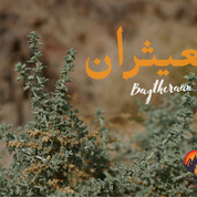 Many kinds of plants grow in Egypt's deserts & they have long been at the heart of Bedouin survival. Successive generations of nomads experimented & re-experimented with plants, getting to know their dangers & uses & passing the knowledge down to generations who followed. Some plants could be eaten. Others could be used to make soap, glues, tinder cloths & other things. This plant is called 'baytheraan': it has crumbly leaves & a menthol scent & is an important medicinal plant. A few of the leaves - roughly a teaspoon-sized handful - can be swallowed with a gulp of water or boiled & drunk warm to treat stomach upsets & diarrhoea. The Latin name for anybody who wants to know is Artemisia Judaica.