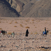 The Bedouin use pick-up trucks for carrying heavy possessions today but most families still keep donkeys & camels. Typically they are used for errands beyond the capacity of pick-ups, such as fetching water from a difficult-to-reach mountain spring. An elderly Bedouin woman is escorting two children with their donkeys here.