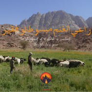 An old Bedouin proverb says the shepherd of a flock might be poor but he's happy. Goats & sheep give the Bedouin milk, butter, ghee, cheese & meat. Their wool is used for making tents, mats & clothes, their hides are used for waterskins & animals can be traded. The Bedouin never saw excess material wealth as a goal: possessions would have hindered the mobility they needed to survive. Their goal was not to have as much as they could but to live with what they needed. It was to live close to nature as free men of the desert. Living like this was what it really meant to be rich. Even today this proverb remains broadly true for nomadic Bedouin, who choose to remain in the desert rather than abandon it for the towns, which they could do at any time.