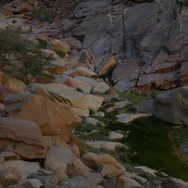 Creeks whisper through the wadis of Jebel Gattar. It is home to more springs & creeks than any massif in these parts of the Red Sea Mountains.