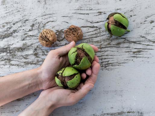 Like minded nuts!