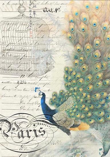 Peacock Ephemera (Right)