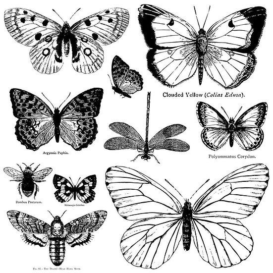 Butterflies Decor Stamp (12x12)
