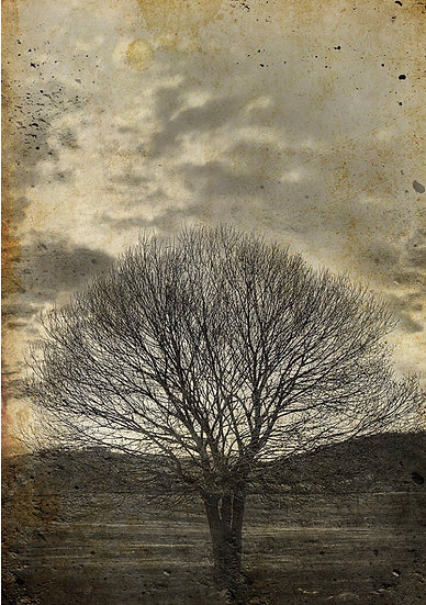 Lone Sepia Tree - Decoupage