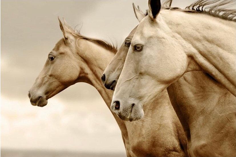 Sepia Horses Decoupage (Reversed)