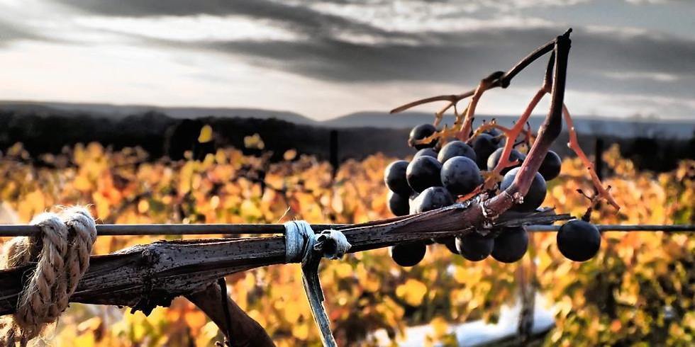 Fall Fest & Fundraiser @ Tolino Vineyards