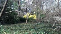 The treachery of spring