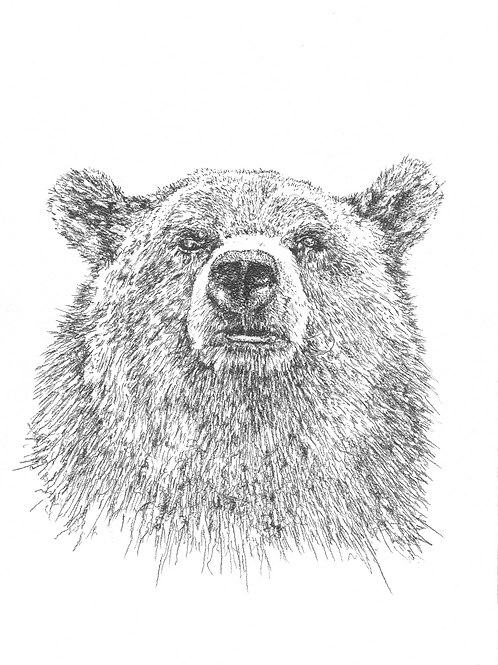 Graphite Grizzly - signed print