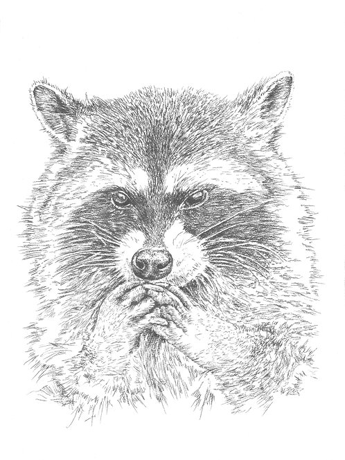 Graphite Raccoon - Original Artwork