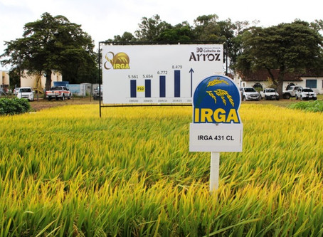 Licenciamento Ambiental para o IRGA - Instituto Rio Grandense do Arroz