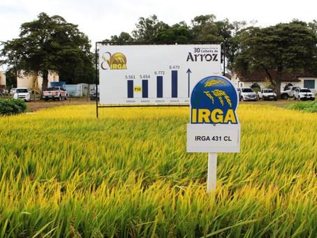 Licenciamento Ambiental para o IRGA - Instituto Rio Grandense do Arroz
