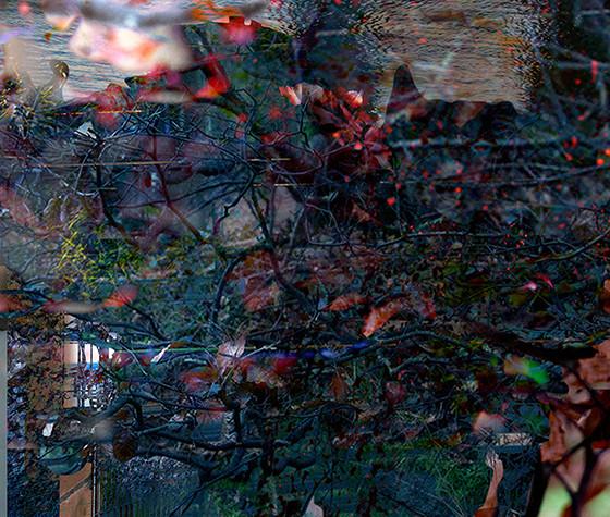Fictional Realities: Sprig, 2015