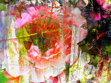 Florid #1, 2015  Archival pigment print on fine art paper, 280 x 280mm