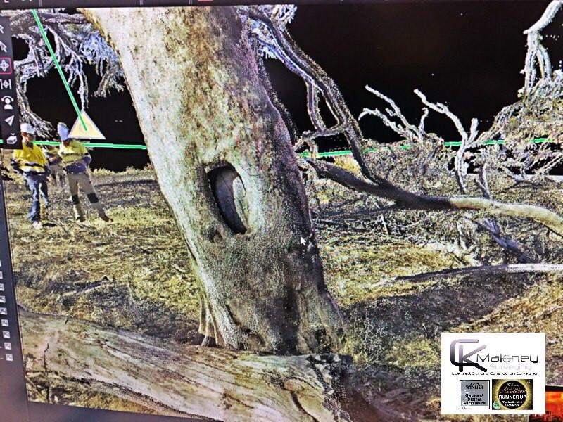 Scar Tree CK Maloney Surveying