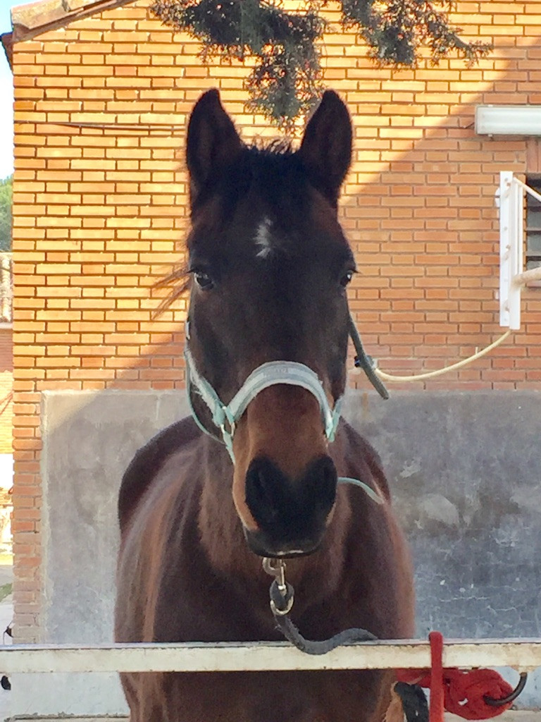 caballos, primavera, blog